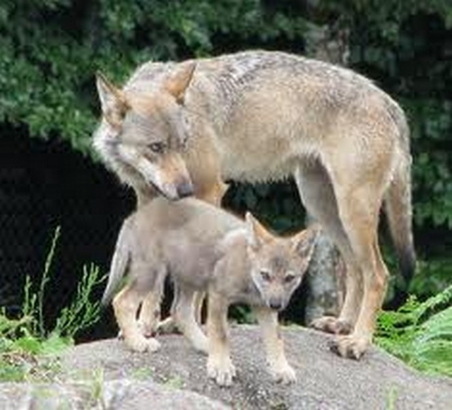 wolvenpark